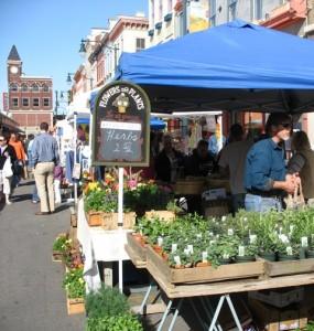 findley market herbs
