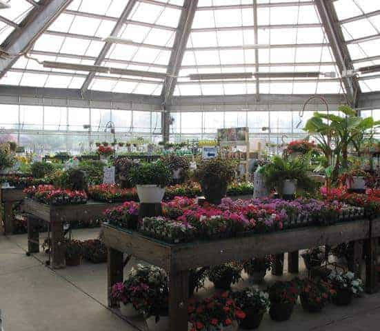 jungle jims greenhouse