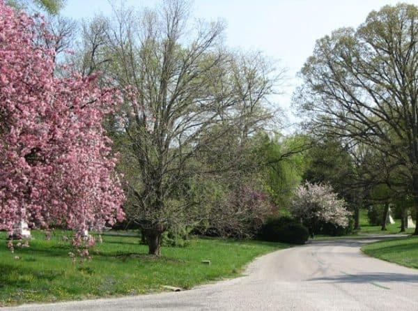 springgrovetreesinbloom