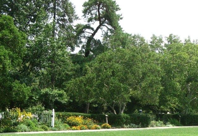 ault park adopt a plot gardening