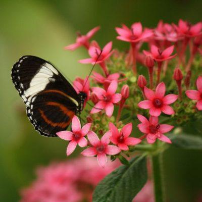 Day 333 – Butterflies of Brazil
