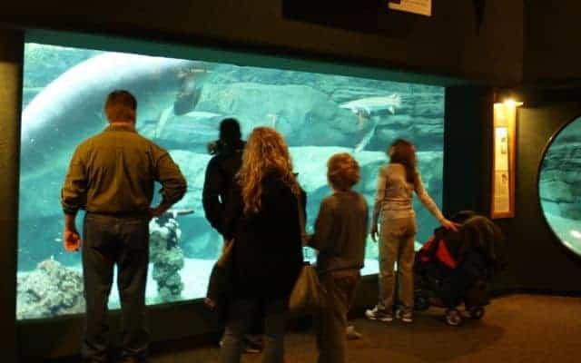 manatees inside cincinnati zoo