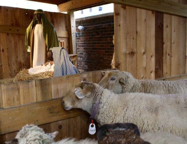 spirit of christmas tour nativity at st francis