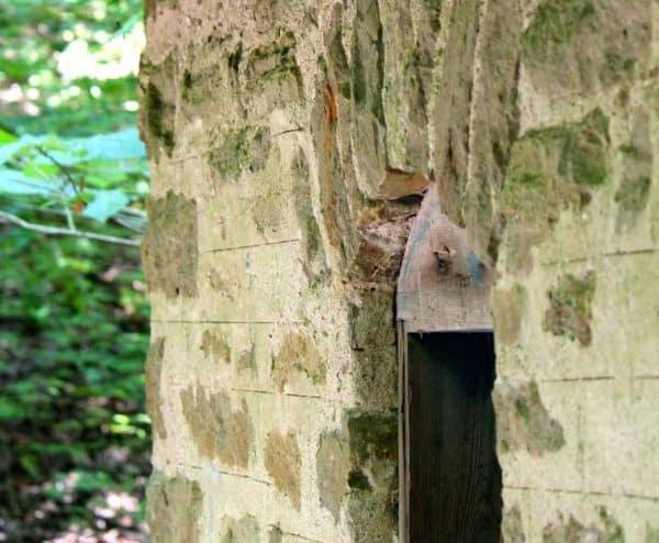 Cincinnati Nature Center Rowe Woods