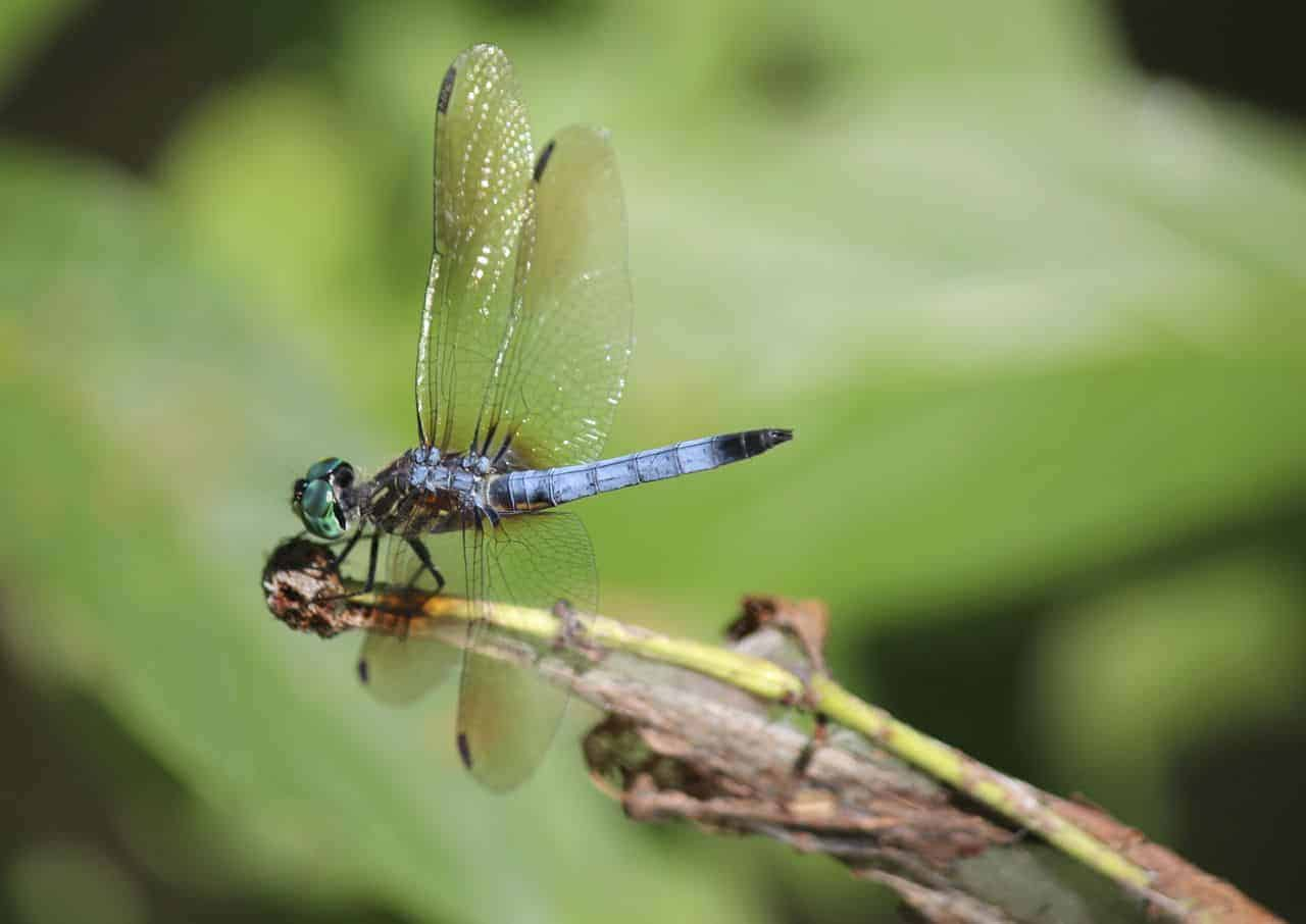 a dragonfly at the pond's edge