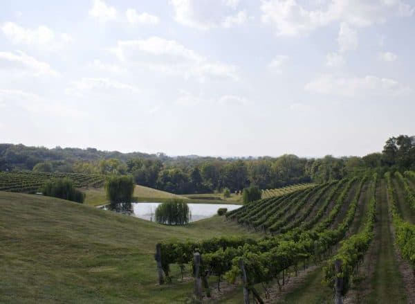 Vinoklet Wine and Art Festival 2013