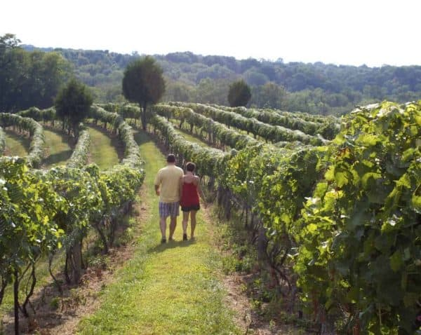 Couple walking in the vineyards at Vinoklet Wine and Art Festival 2013