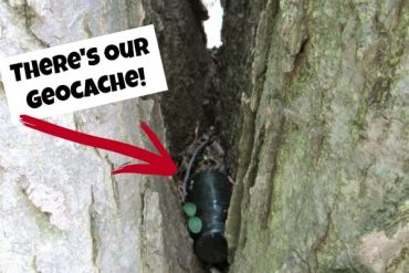 geocache tube in tree