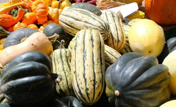 Fall gourds at Findlay Market