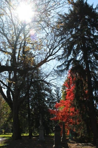fall leaves at Spring Grove Cemetery