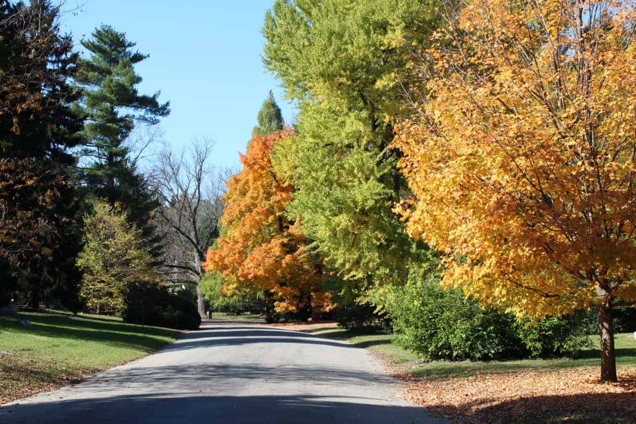 fall foliage at Spring Grove Cemetery