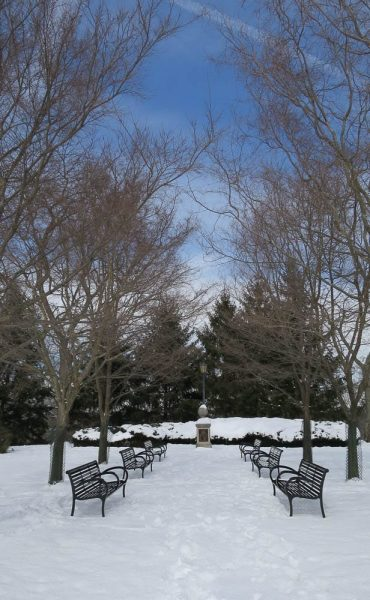 Bare trees and blue skies at Ault Park