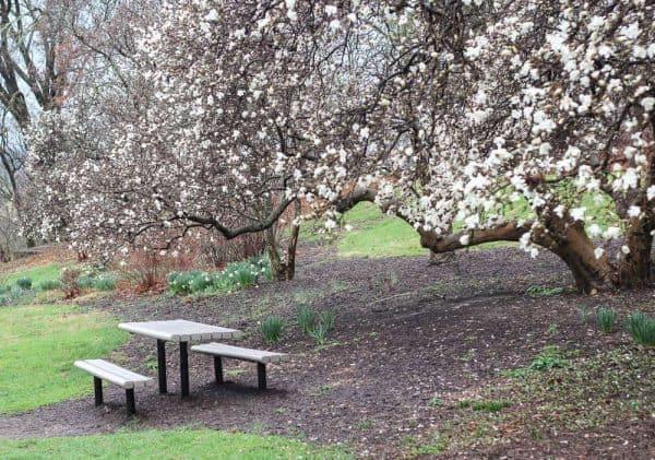 Spring Blooms at Eden Park