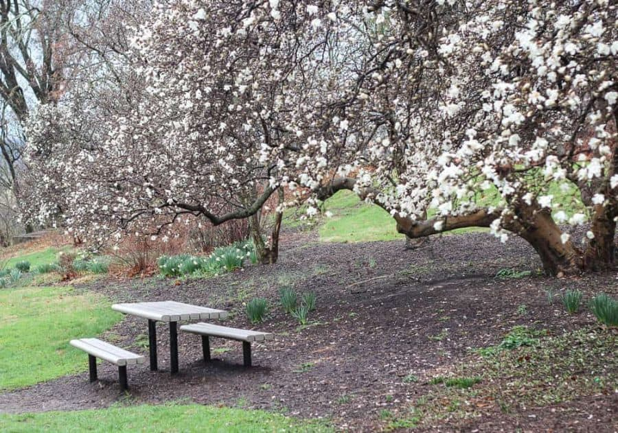 Picnic table amongst the spring Blooms at Eden Park