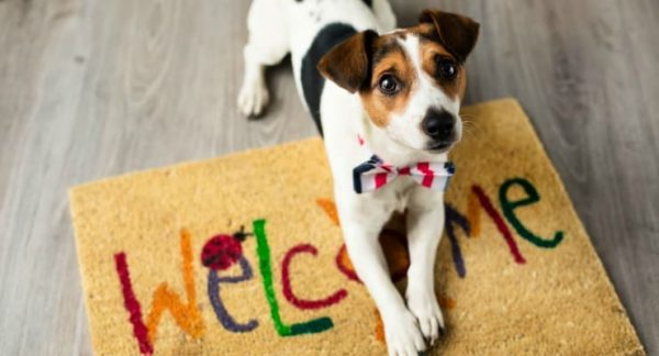 Dogs Welcome Here