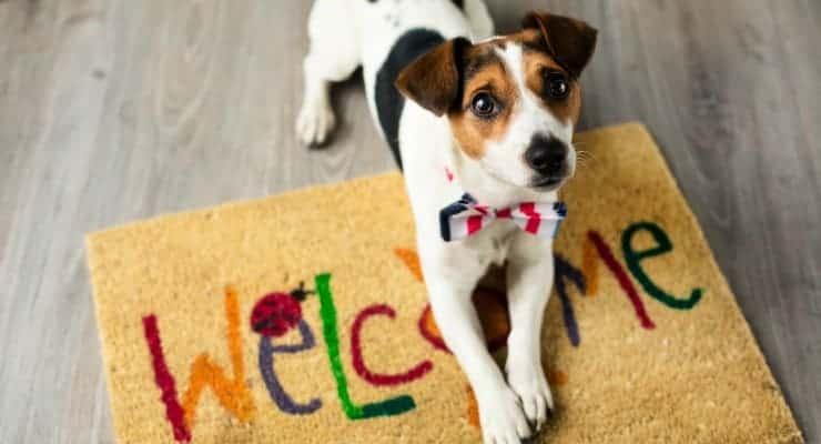 Dog Friendly Stores In Cicinnati