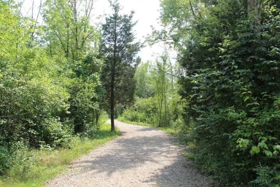 Wooded trail at Summit Park in Blue Ash
