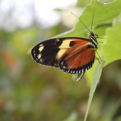 Butterfly Show at the Krohn Conservatory