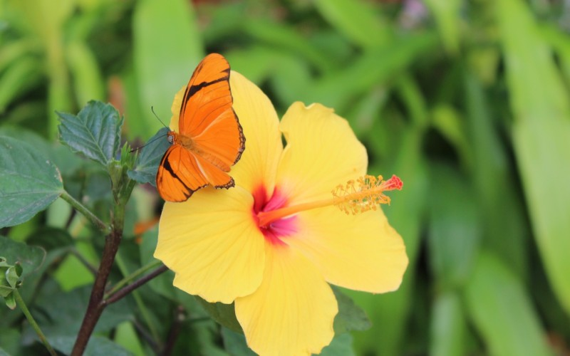 Butterflies of the Caribbean at the Krohn Conservatory