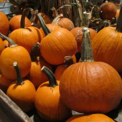 Pumpkins at Bonnybrook Farms