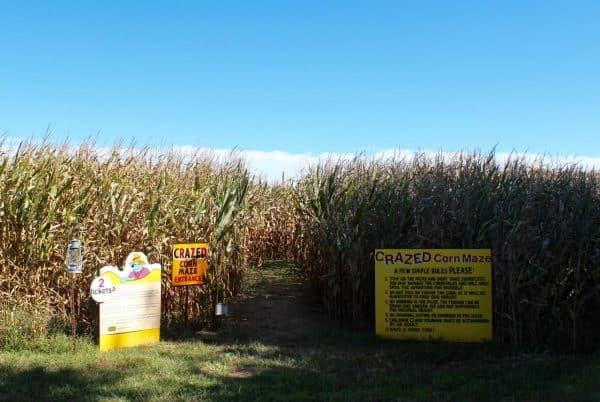 Corn Maze at Bonnybrook Farms
