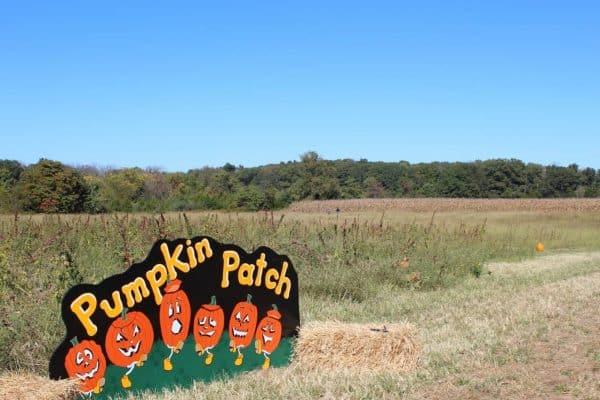 Pumpkin Patch at Bonnybrook Farms