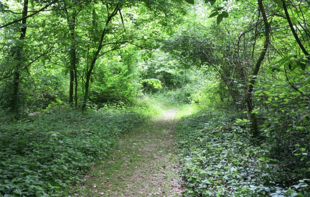 wooded trail at Parky's Farm