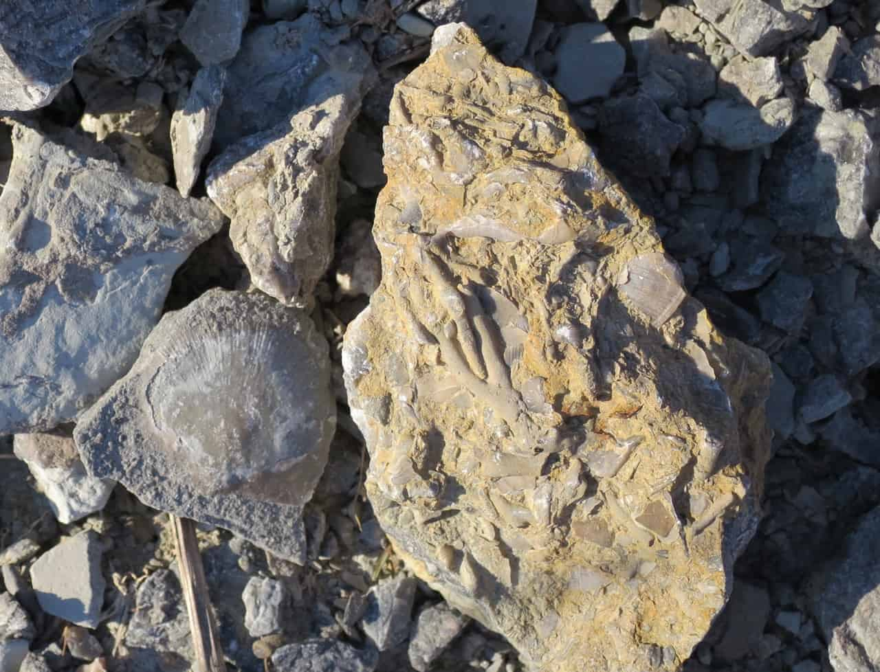 Fossil Finds at Trammel Fossil Park