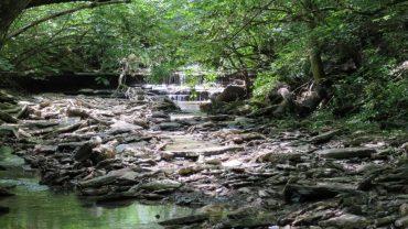 Rentschler Forest Preserve - MetroParks of Butler County