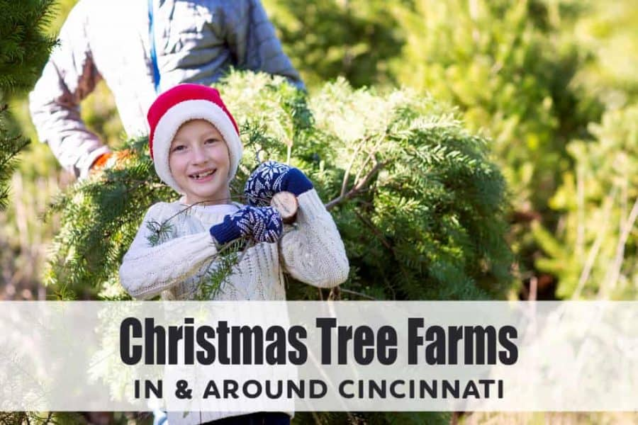 Christmas Tree Farms in Cincinnati