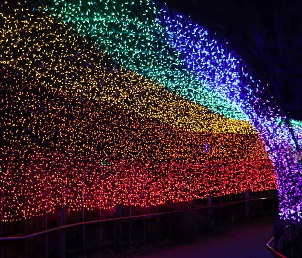 Lights at the Cincinnati Zoo Festival of Lights