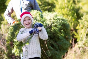 Christmas Tree Farms in Cincinnati Ohio