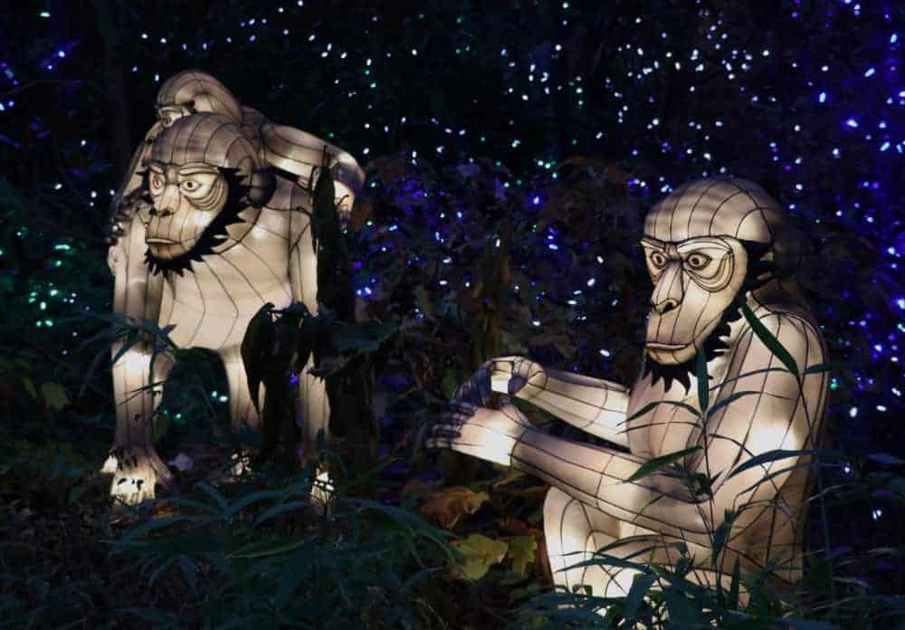 Gorilla Lanterns at the Festival of Lights, Cincinnati Zoo