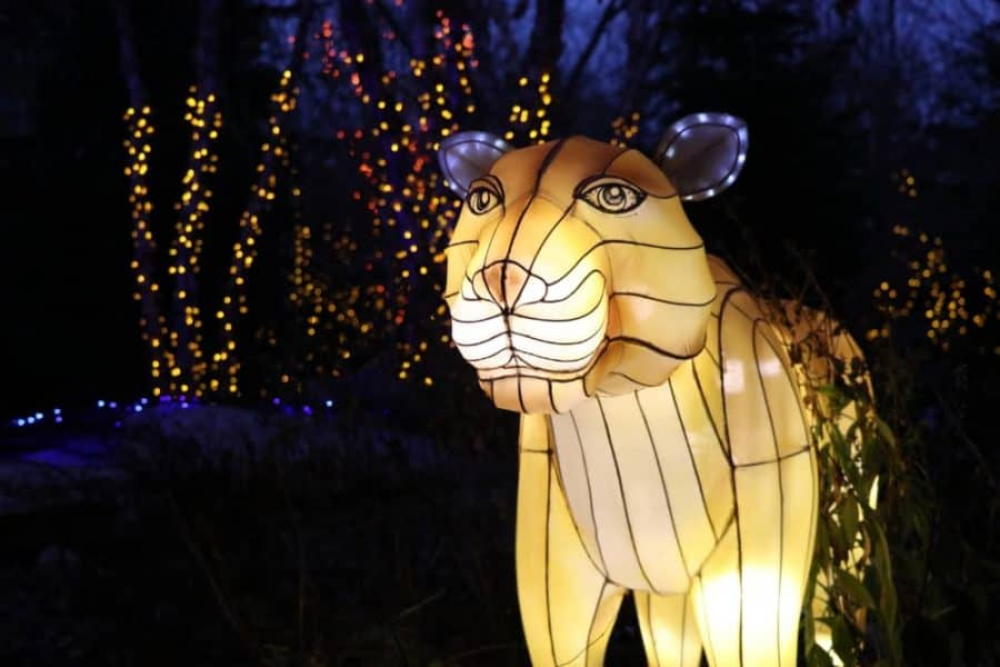 Tiger Lantern at Cincinnati Zoo's Festival of Light