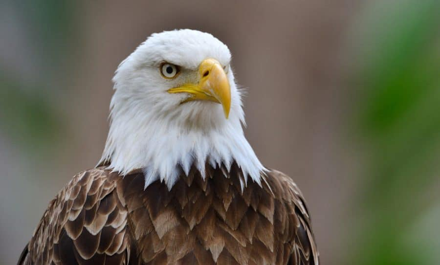 Birdwatching in Cincinnati with hopes of spotting a bald eagle
