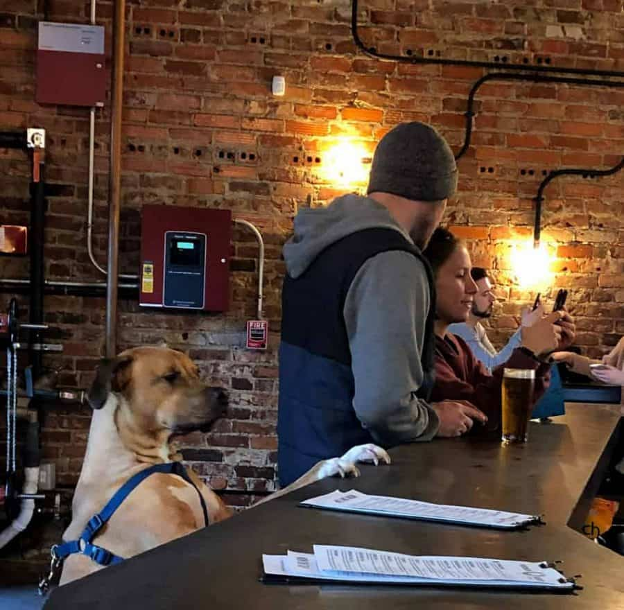 The Woodburn Brewery is pet friendly