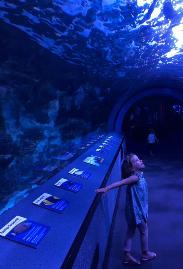 Gazing at sharks in the tunnel at Newport Aquarium