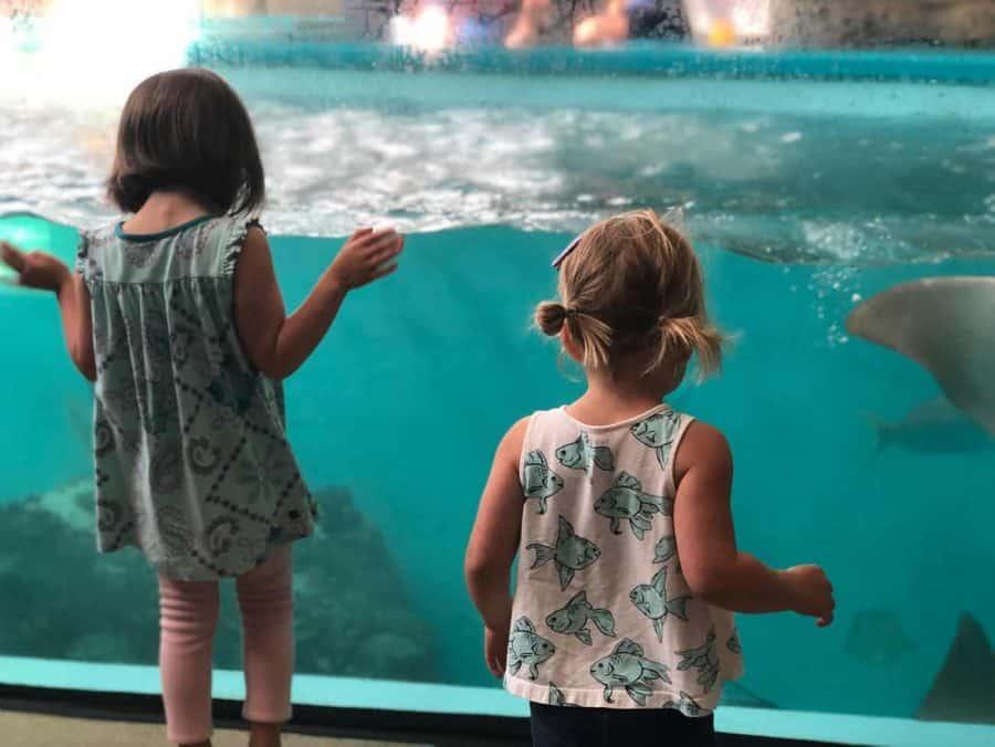 Loads of fish at Newport Aquarium