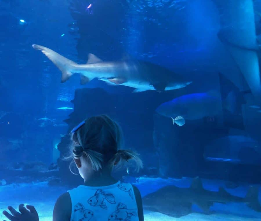 watching sharks in the tank at Newport Aquarium