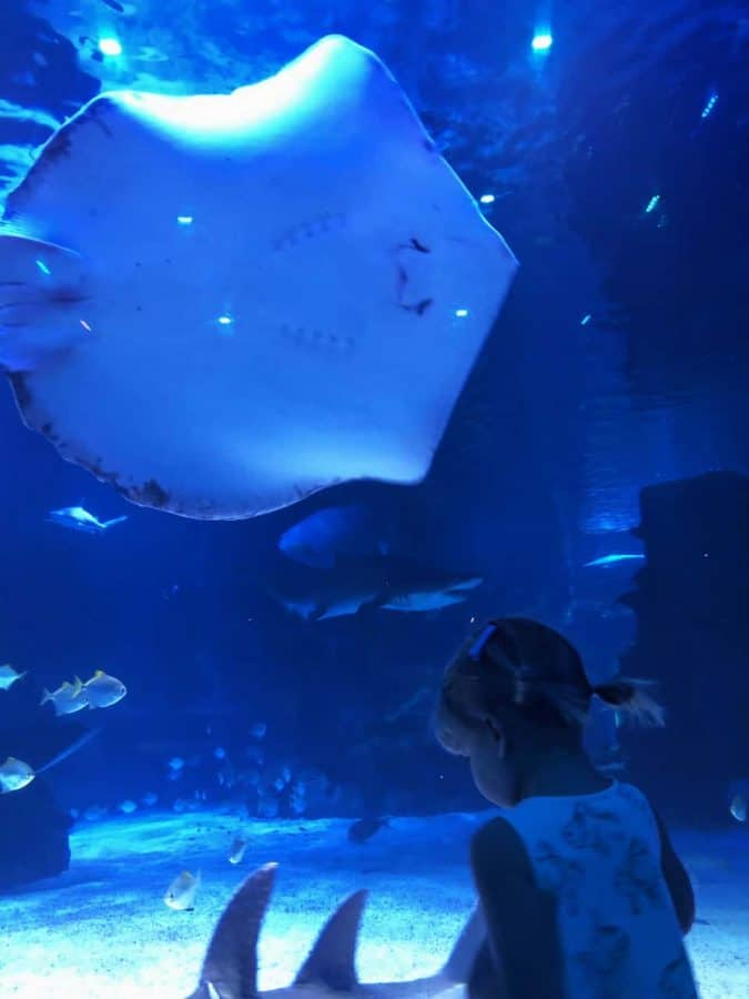 sharks and stingrays in the tunnels at Newport Aquarium