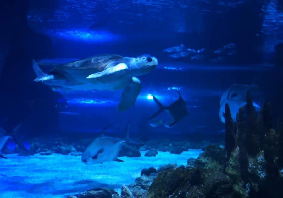 Sea Turtles in the tank