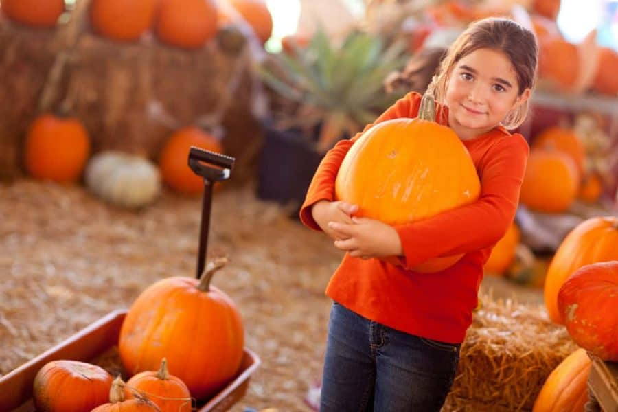 girl with pumpkin at the pumpkin patch