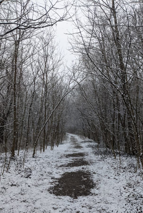 Kingfisher Trail in the snow