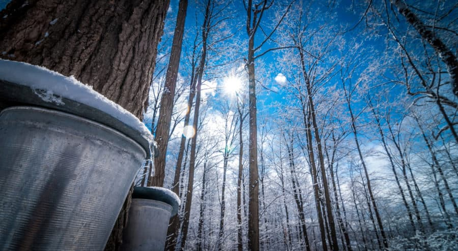 Maple Sugaring in Ohio