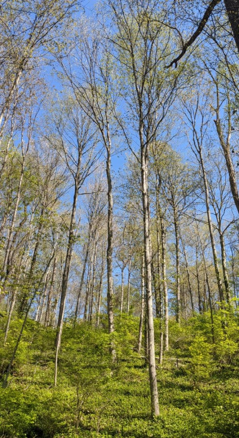 Trees with spring growth on the trail at Caldwell Nature Center