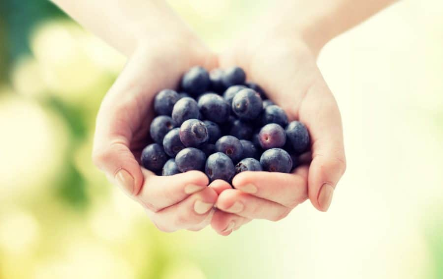 picking your own blueberries