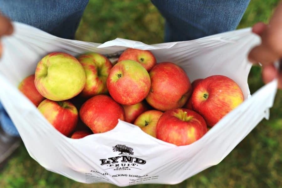 apples at Lynd Fruit Farm