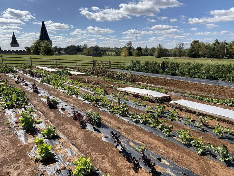 The gardens, supplying food for the Castle Farms restaurant