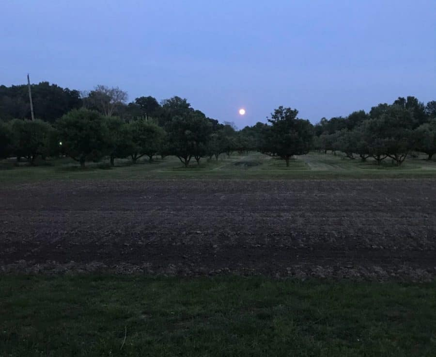 Pringles Apple Orchard