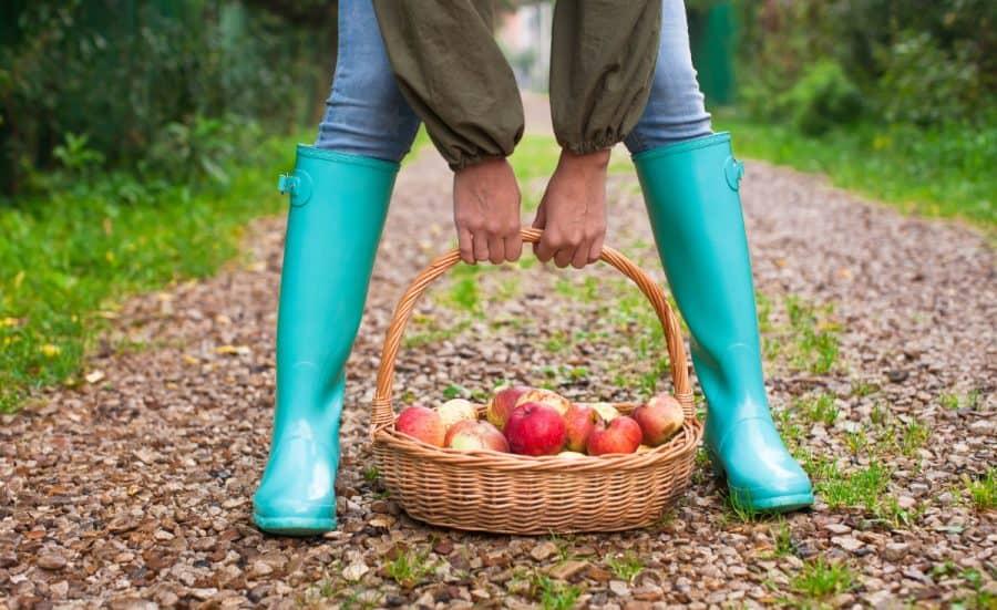 U pick apple farms in and around the Cincinnati area